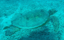 Interesting and fun facts about sea turtles