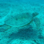 9 Interesting Facts about Sea Turtles You Didn't Know (with pictures)
