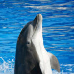 16 Interesting Facts about Dolphins You Didn't Know (with pictures)